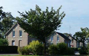 Cité des acacias - CONDE SUR L'ESCAUT - Condé-sur-l'Escaut