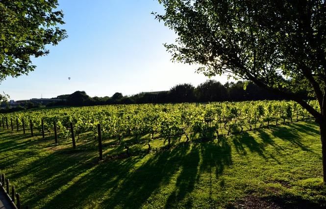 Le site du vignoble 7 - Valenciennes